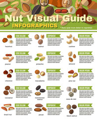 Nuts Infographics Set