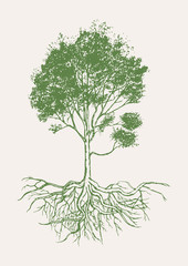 Hand drawn of tree with roots.Vecter and illustration.
