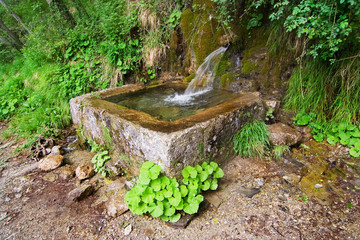 mountain spring fresh pure water in a stone fountain surrounded by plants in European Alps