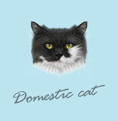 Domestic cat portrait