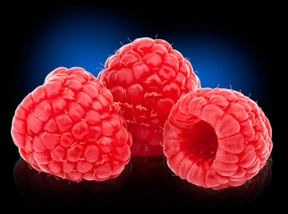 Three ripe raspberries isolated on blue to black background with clipping path and reflections