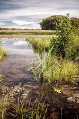 Autum marsh along the Mohawk River in Niskayuna, New York
