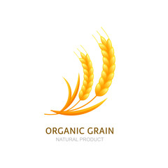 Wheat or rye grain logo, icon or label vector design elements. Concept for organic products, harvest and farming, bakery. Healthy food symbol.