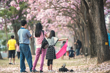 Tourists take pictures sakura