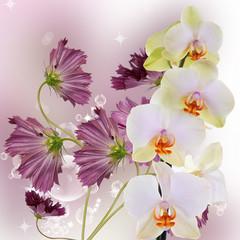 Beautiful exotic flower