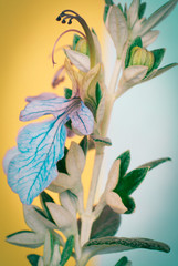 Wall Murals Botanical rose bud on turquoise and yellow background
