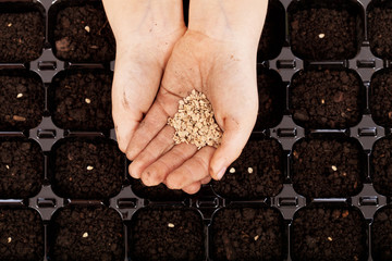 Child hands with seeds to be sowed