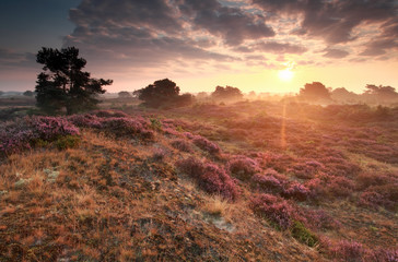 stunning sunrise over hills with heather flowers