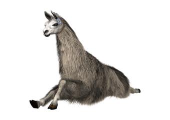 Llama or Lama on White