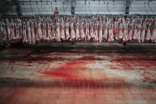 Sheep meat in a slaughterhouse