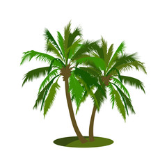 isolated coconut tree vector illustration