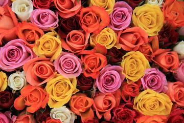 In de dag Roses Multicolored wedding roses