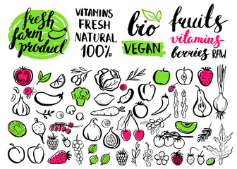 Vector handwritten food elements with rough edges.