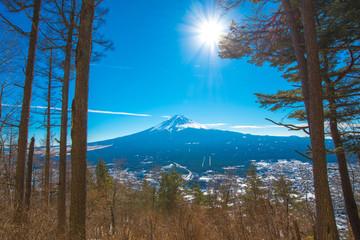 Tree foreground and Fuji mountain