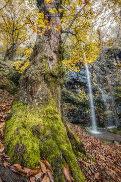 Cascada en lo profundo del bosque otoñal