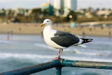 Seagull on the Pier in Santa Monica, CA