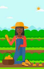Farmer collecting carrots.