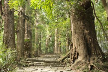 杉並木と熊野古道(大門坂)の石段の道