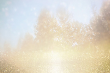 abstract photo of forest and glitter bokeh lights. image is blurred and filtered.