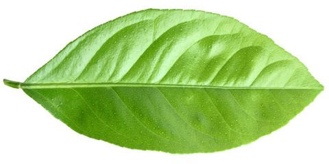 lemon leaf close-up