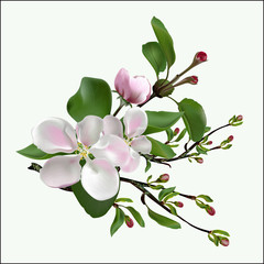 Spring flowers on an apple-tree branch.