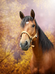 Brown horse in autumn landscape