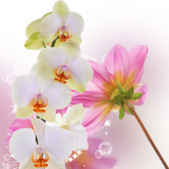 Beautiful exotic flower orchid on abstract nature background