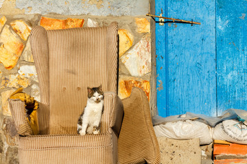 Gato sentado en sillón al sol.