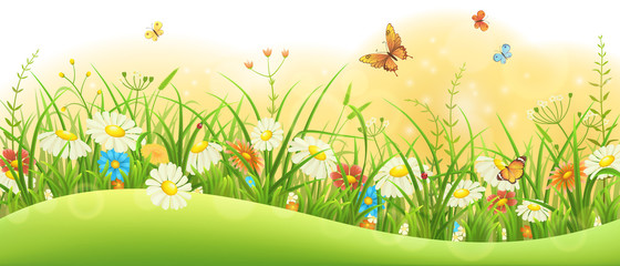 Summer floral banner with green grass, flowers and butterflies