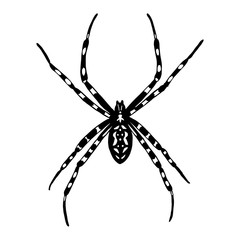Illustration of black and white spider. Argiope bruennichi. Vect