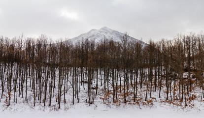 Paisaje nevado. Bosque de robles y Pico Susarón. Puebla de Lillo, León.