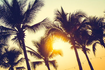Silhouette palm tree with sunset