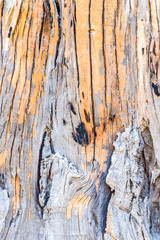 texture of bark wood used as natural background