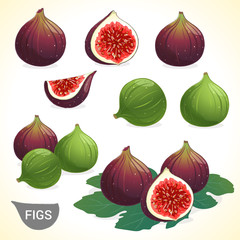 Set of dark fig and green figs in various styles vector format