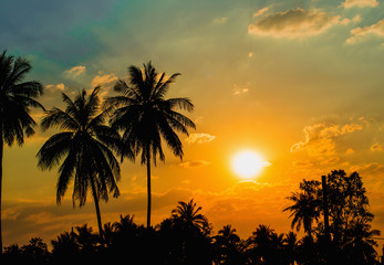 Silhouetted of coconut tree sunset