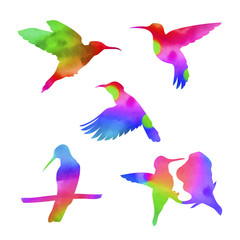 Vector watercolor colibri set