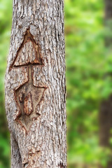 Arrow carved into a tree trunk indicating direction of forest trail