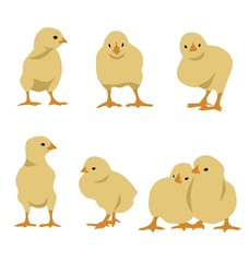 Set of chickens, vector, no gradient or opacity-effects