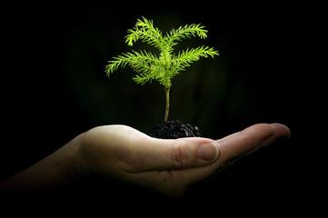 Cradling New Life/ Hand Holding Baby Plant On Dark Background