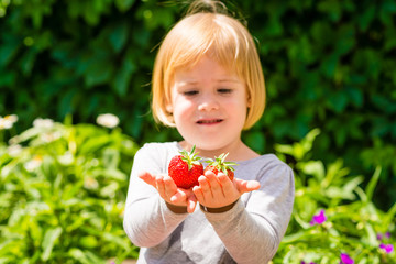 Little girl looks at two strawberries which holds in hands . Sunny summer day on countryside village.