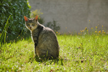 Cat outdoor