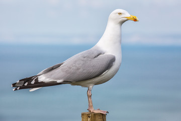 A seagull pearched on a post.