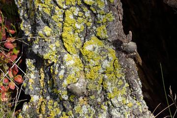 Bark of tree close up.
