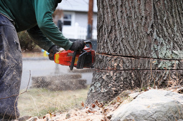 working man cutting tree trunk with chainsaw in residential area