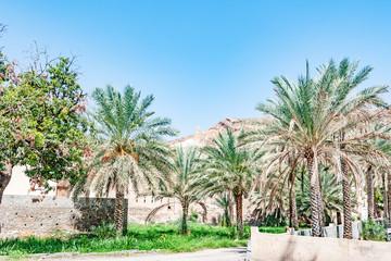 Omani oasis at Al-Katmeen in Nizwa, Dakhiliya, Oman.