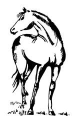 Graphics horse