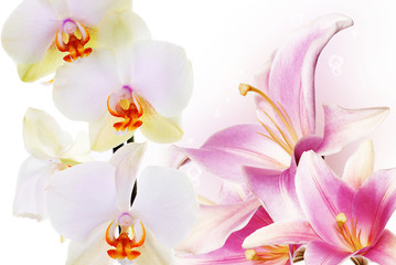 Orchid with flower lily.Floral background