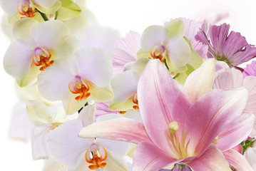 Beautiful flower background.Lily with exotic orchid