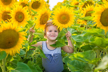 Little girl in striped dress holds in hands two sunflowers. Sunny summer day in field of sunflowers.