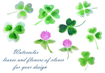 Watercolor leaves and flowers of clover for your design